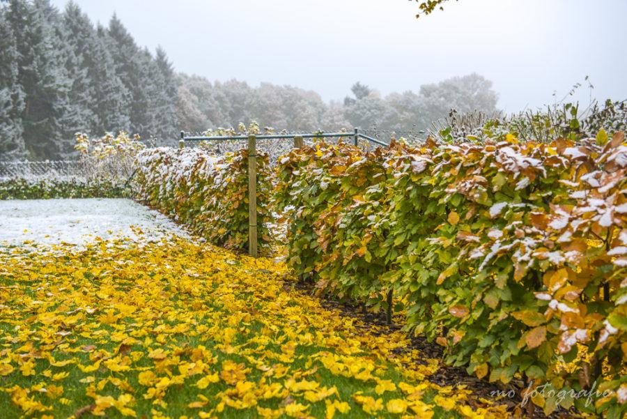 Herbstwinter